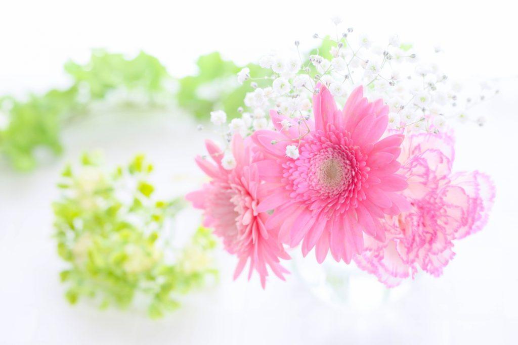キレイなお花の写真